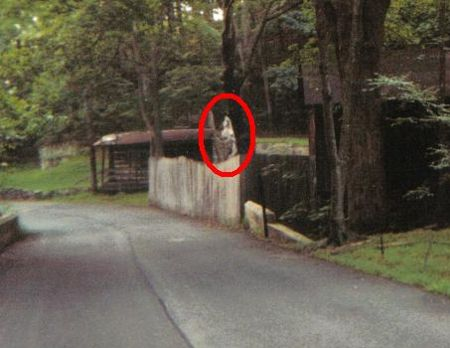 Real Ghost Sigh... Awesome Pictures Of Werewolves